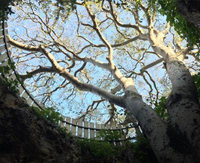 מעיין, מערה ועץ נדיר שצומח מתוכה